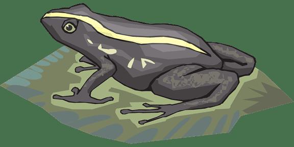 牛蛙是野味吗
